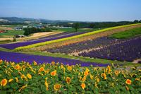 Flower garden of Sunrise Park Stock photo [160621] Hokkaido