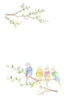 Card, parakeet [5033203] An