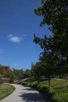 城山公園 緑の散歩道