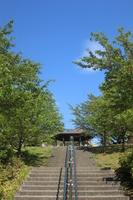 城山公園 散歩道 緑