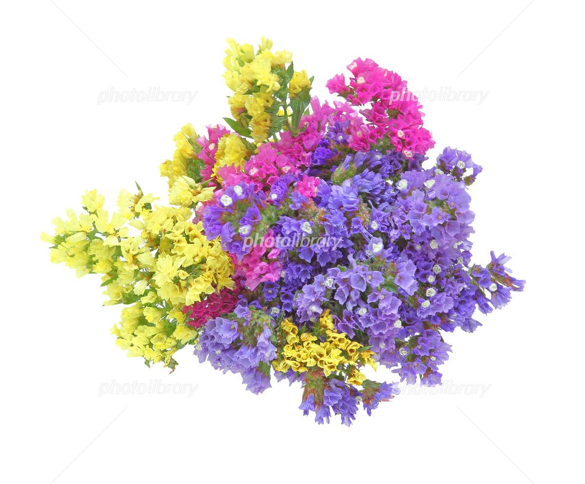 スターチスの花束 写真素材 5134740 フォトライブラリー Photolibrary