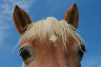 Horse and blue sky Stock photo [179978] Horse