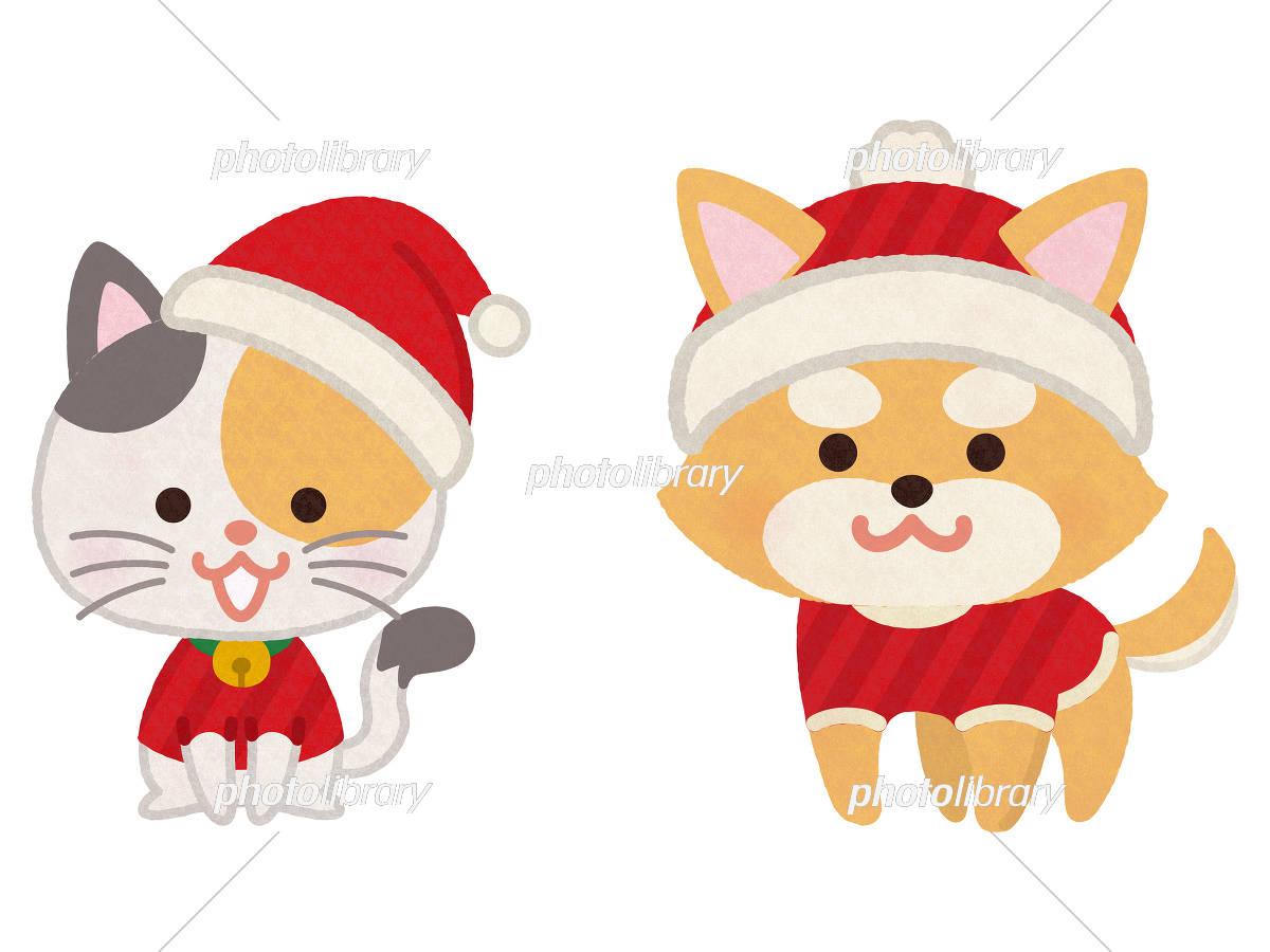 クリスマスカラーの服を着た犬と猫 イラスト素材 5754700 フォト