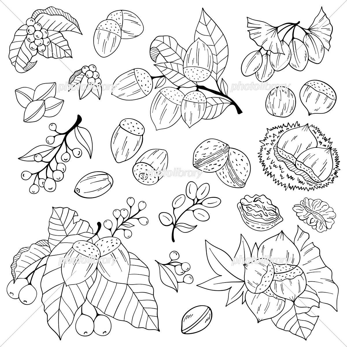 秋の植物イラスト素材 イラスト素材 5789577 フォトライブラリー