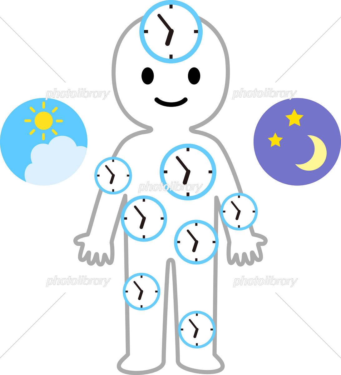 人間の体内時計のイメージ イラスト素材 [ 5822798 ] - フォトライブ ...