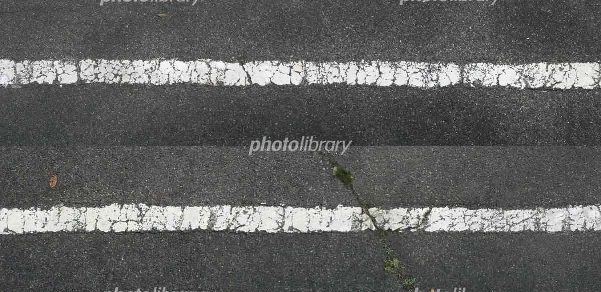 アスファルト白線 写真素材 [ 33...