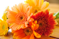 Gerbera Stock photo [327706] Gerbera