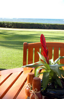 Tropical terrace Stock photo [336910] Red