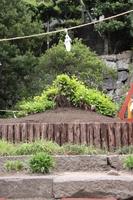 Large ginkgo of Tsuruoka Hachiman Stock photo [817424] Tsuruoka