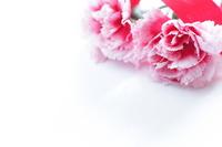 Carnation background Stock photo [820495] Carnation