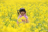 Girl of 3-year-old playing in the rape field Stock photo [820504] 3-year-old