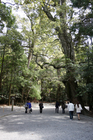 Ise Shrine approach Stock photo [821487] Grand