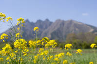 Rape flowers and Aso Nekodake Stock photo [822323] Kumamoto