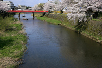 Uchikawa cherry blossoms and Sanyuki-kyo Tsuruoka, Yamagata Prefecture in late April Stock photo [822580] Yamagata