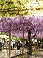 Fuji Mandala temple park Stock photo [823987] Fuji