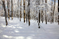 Snow of beauty forest Stock photo [825131] Beauty