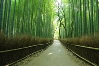 Trail of Saga bamboo forest Stock photo [887463] Bamboo
