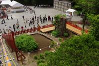 Tsuruoka Hachiman Shrine of fallen large ginkgo Stock photo [887734] Tsuruoka