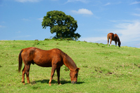 Horses grazing in the meadow Stock photo [890171] Horse