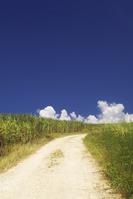 Okinawa Miyako of sugar cane fields and thunderhead Stock photo [890982] Sugarcane