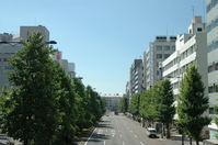 Niigata City skyline (Higashiodori) Stock photo [891979] Niigata