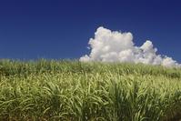 Okinawa Miyako of sugar cane fields and thunderhead Stock photo [892273] Thunderhead