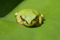 Frog Stock photo [892414] Frog