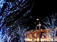 Roppongi zelkova slope illumination Stock photo [896316] Illumination
