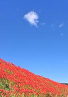 Amaryllis and blue sky Stock photo [990703] Amaryllis