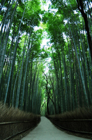 Bamboo forest Stock photo [992224] Bamboo