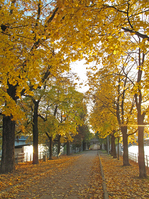 Promenade along the Seine river dyed in yellow Stock photo [993241] Europe