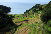 Genkai Hamanoura of rice terraces Stock photo [993571] Saga