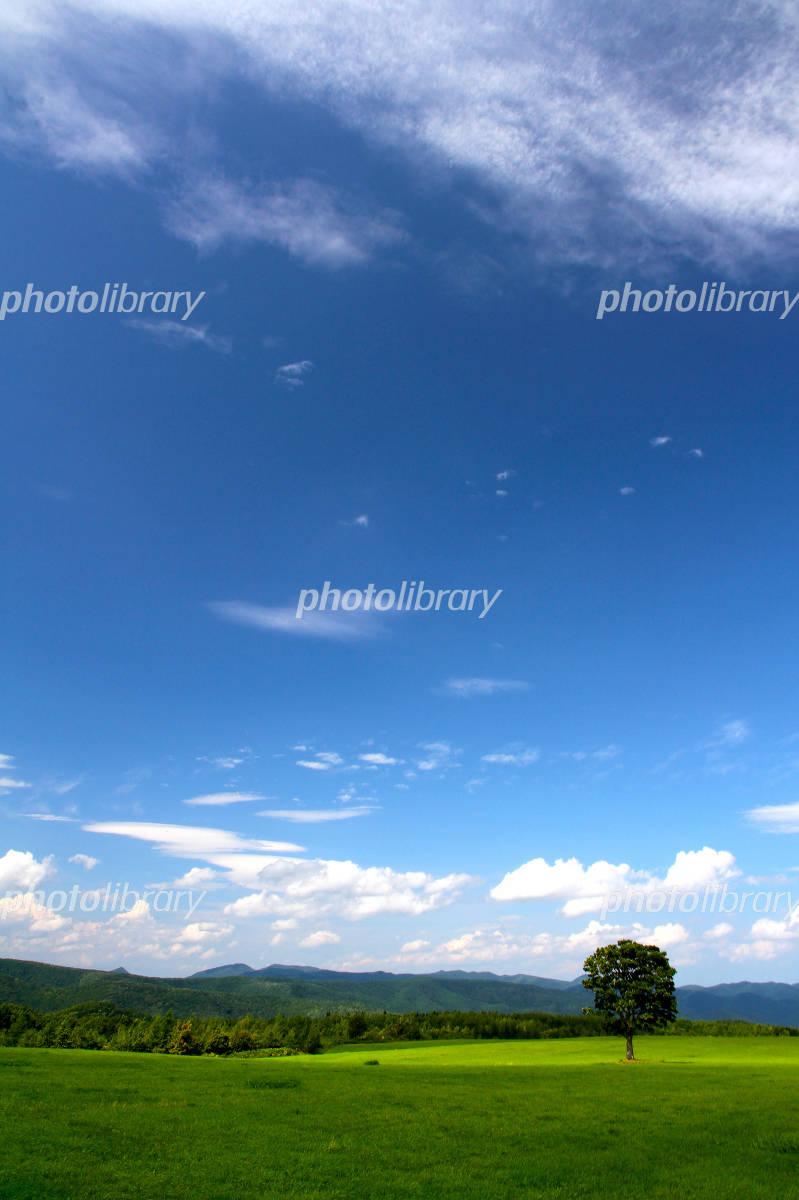 北海道の大草原と青空 写真素材 1103724 無料 フォトライブ