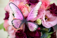 Pink butterfly and flowers Stock photo [1095316] Butterfly