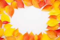 Fallen leaves of frame (cherry) Stock photo [1096988] Frame