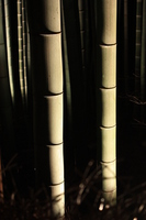 Night of the bamboo forest Stock photo [1097577] Japan