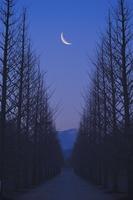 Moon and tree-lined Stock photo [1099217] Moon