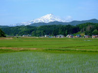 Early summer of rice fields and Mt.Chokai Stock photo [1103904] Rice