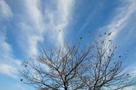 Late autumn sky Stock photo [1106457] Cloud