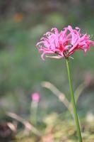 Diamond Lily Stock photo [1109431] Diamond
