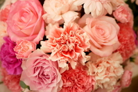 Pink carnation and pink us Stock photo [1109865] Carnation