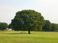 Big tree Stock photo [1208715] Wood