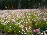 Wild Flower Stock photo [1209784] Oceania