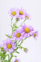 Daisy Stock photo [1214947] Daisy