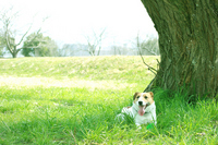 Grassland and dogs Stock photo [1295304] Dogs