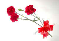 Red carnation Stock photo [1296950] Mother's