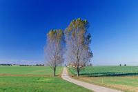 Road of grassland Stock photo [1297071] Prairie