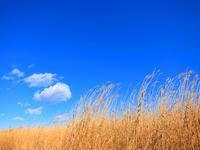 Winter blue sky Stock photo [1297480] Blue