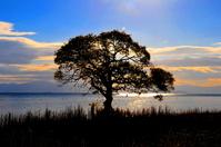 Sunrise Stock photo [1299147] Wood