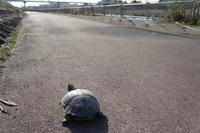 Turtle Stock photo [1301576] Turtle